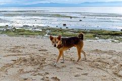 Spela med min hund på stranden Arkivbilder