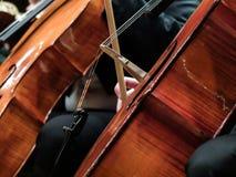 Spela på violonceller i en konsert arkivbild