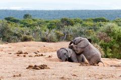 Spela som är dött - afrikanBush elefant Arkivfoto