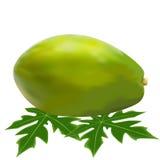 Spelaya papaya του φύλλου Στοκ Φωτογραφίες
