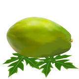 Spelaya of papaya leaf Stock Photos