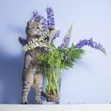 Spelen van de gestreepte kat de nieuwsgierige kat met lupines in vaas Royalty-vrije Stock Foto's