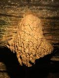 Speleothem qui ressemble à la perruque Photo stock