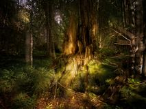 Spell forest in Sweden. A spell forest in Sweden Stock Photography
