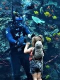 Girl and Diver High Five. A spellbound young tourist high fives a diver through the glass at the Georgia Aquarium in Atlanta. Feeding time attracts a plethora of Royalty Free Stock Photos