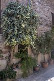 Spello, Perugia, medieval city Stock Photography