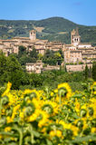 Spello Umbria Italy. Village and sunflowers landscape view stock photos