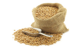 Spelt in a burlap bag with an aluminum scoop Stock Photo