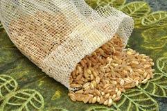 Spelt grains. Spelt or farro grains in bag royalty free stock image