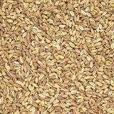 Spelt organic wheat raw cereal close up texture or background Royalty Free Stock Photo