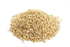 Spelt seeds on white Stock Images