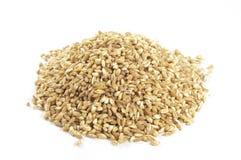 Spelt seeds on white. Spelt seeds on a  white background Stock Images