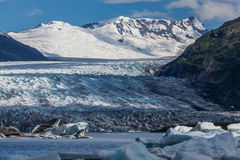 Spencer Glacier. With ice bergs floating on Spencer Lake Royalty Free Stock Photos