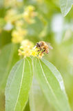 Spend bees Royalty Free Stock Photo