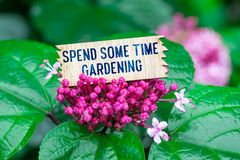 Spend some time gardening in wooden card. Spend some time gardening text in broken wooden card on beautiful flower at the rain stock photo
