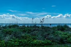 Wonderful Day st the Park. Spent a wonderful day at Cypress Point Park in Tampa Florida royalty free stock photo