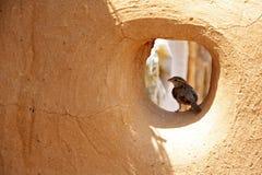 Speranza di un passero fotografie stock libere da diritti
