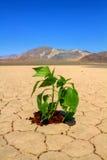Speranza per l'ambiente verde fotografia stock