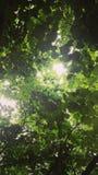 Speranza verde fotografie stock libere da diritti