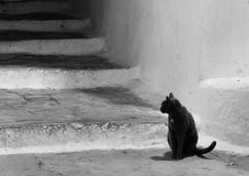 Sperlonga lazio italy black & white  black cat Royalty Free Stock Photography