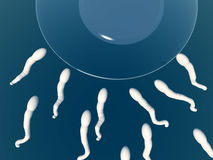 Sperm. An image of some sperm about to fertilize an egg Stock Image