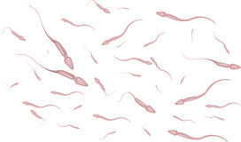 Sperm Royalty Free Stock Photography