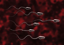Sperm cell. Who will be the winner Stock Image