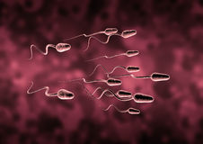 Sperm cell. Who will be the winner Royalty Free Stock Images