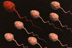 Sperm cells competing Royalty Free Stock Image