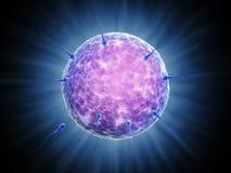 Sperm cells reaching their goal. The female sperm egg Stock Photos