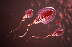 Sperm cells swim to the egg. 3d Royalty Free Stock Photography