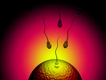 Sperm and egg Royalty Free Stock Images