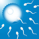 Sperm and Egg. Sperm Cells on their way to the egg Stock Image