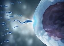 Sperm and egg cell. 3d high quality rendering Stock Photo