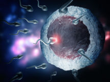 Sperm and egg cell. 3d high quality rendering Stock Photography