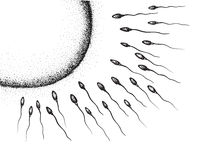 Sperm and egg cell hand drawing. The sperm and egg cell hand drawing Royalty Free Stock Image