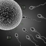 Sperm and egg cell. microscopic. Image Royalty Free Stock Photo