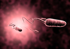 Sperm and egg cell. Natural insemination sperm and egg cell Stock Photo
