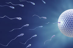 Sperm and egg Fecundation Royalty Free Stock Images