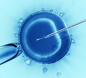 Sperm injection. Into the cell Stock Photos