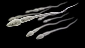 Sperm macro on the black background Stock Photo