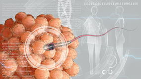 Sperm, spermatozoon fertilizes the cell egg. Medical concept anatomical future. HUD futuristic background. Sperm, spermatozoon fertilizes the cell egg. Medical stock footage