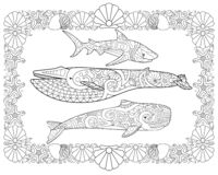 Free Sperm Whale, Blue Whale And Shark In A Frame From Shells - Horizontal Vector Page Coloring Antistress. Vector Coloring Book With S Royalty Free Stock Photography - 182376947