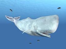 Sperm Whale stock illustration