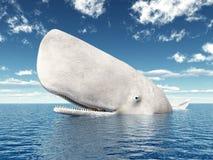 Sperm Whale Royalty Free Stock Photos
