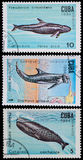 Sperm whale Stock Photo