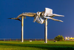 Sperm whale skeleton statue Stock Photo