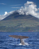 Sperm whale in front of volcano Stock Photos