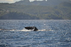 Sperm Whale Tail Royalty Free Stock Photos