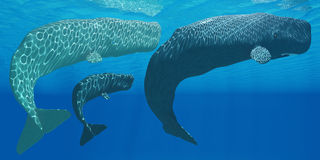 Sperm Whales royalty free illustration